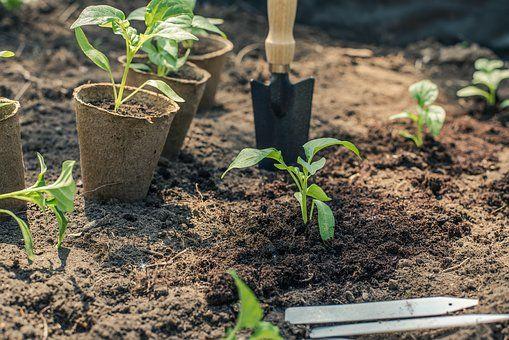 Akými spôsobmi zlepšiť kvalitu pôdy a zaistiť optimálny rast rastlín?