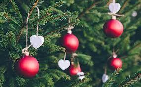 Výber živého vianočného stromčeka