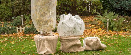 Ako ochrániť rastliny pred zimou?